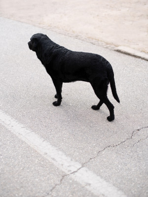 Dog Minimalism